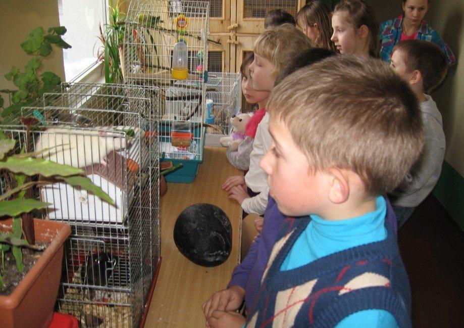Ваши 10 экологических наюлюдений за попугаем комп